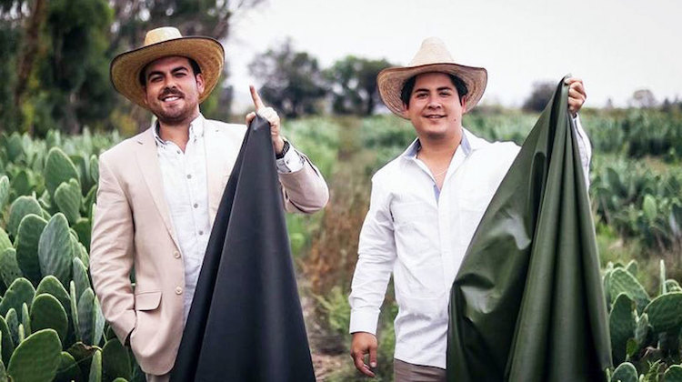 The Hog Ring - Mexican Company Invents Cactus Leather