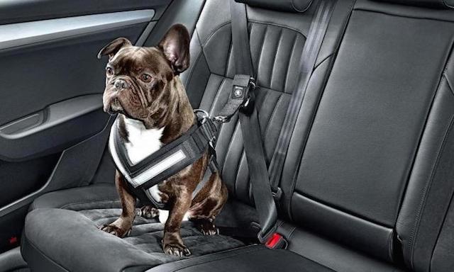 Auto Upholstery - The Hog Ring - Skoda Dog Seat Belt