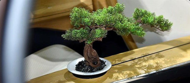 The Hog Ring - GAC Motor Debuts Onboard Bonsai Tree