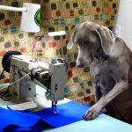 The Hog Ring - Submit a Photo for Keyston Bros 2022 Shop Dog Calendar